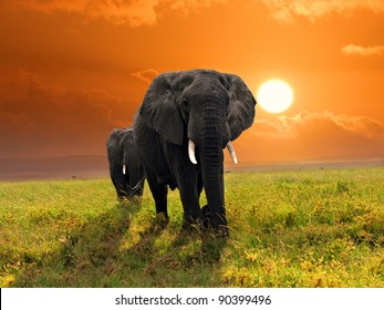 Two adult african elephants walking in savannah against sunset, Serengeti, Tanzania