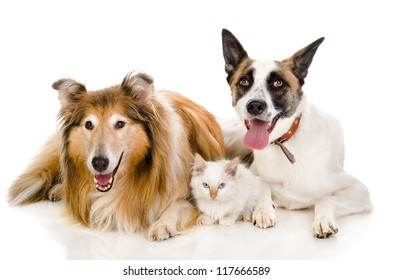two adult dogs and tiny kitten. isolated on white background