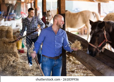 Two adult  happy males giving hat to horse at barn and smiling