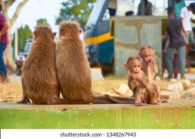 Two adult monkeys from behind with two separated baby monkeys from front are sitting, Bandipur national park, Karnataka, India