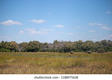 TWO AFRICAN ELEPHANT IN A GRASS LANDSCAPE