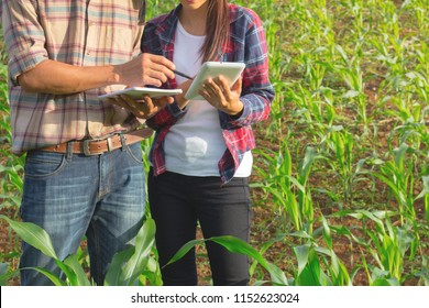 Two agricultural researchers are studying the growth of corn plants.