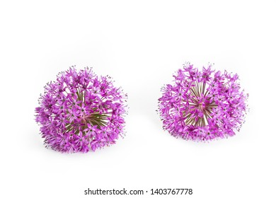 Two allium flowers isolated on white background