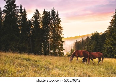 Two alone horses on mountain meadow in sunset