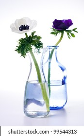two anemone flowers  in a bottles on white background