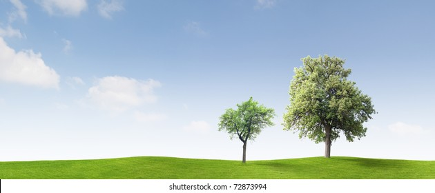 Two apple trees on a meadow