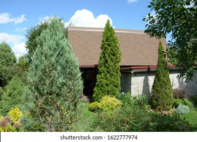 The two arborvitae (Thuja occidentalis 'Smaragd') near the summer house. Two emerald arborvitae as an accent in the garden design. Sunny summer day.