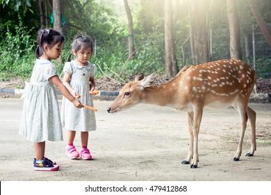 Two asian little girls feeding deer in the zoo