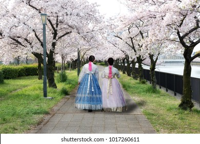 Two Asian woman wearing Korean national dress walking in park and cherry blossom in spring in Seoul, South Korea. Spring season in South Korea.