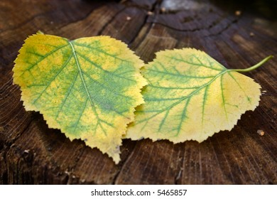 Two autumn leaves over the tree background