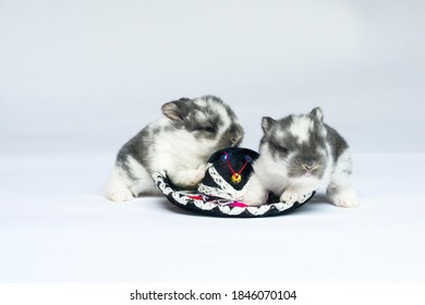 Two Baby Bunnies Sitting by a Tiny Sombrero Hat