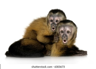 Capuchin Monkey Images, Stock Photos & Vectors | Shutterstock