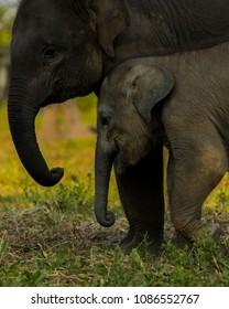 two baby elephants