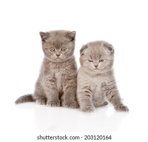 two baby kittens in front. isolated on white background