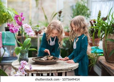Two baby sisters in a winter garden behind an old wooden wooden rustic table with flowering orchids and a tub of water and stones. little girls play with stones and orchids