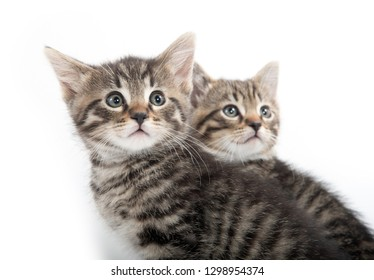 Two baby tabby kittens isolated on white background