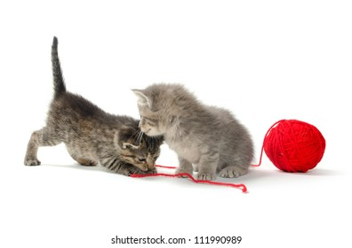 Two baby tabby kittens with red ball of yarn on white background