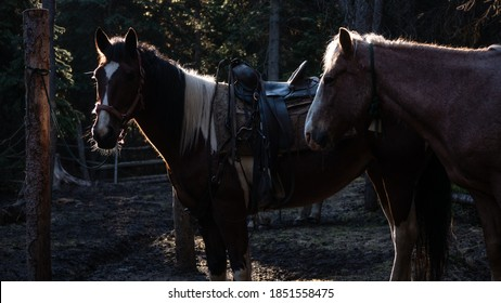 Two backlit quarter horses (one a paint) waiting at a post, ready to ride.
