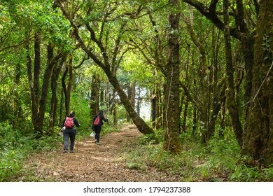 Two backpackers friends spend their leisure activity trekking into the forest