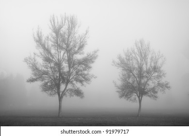 Two bare trees in fog in winter.