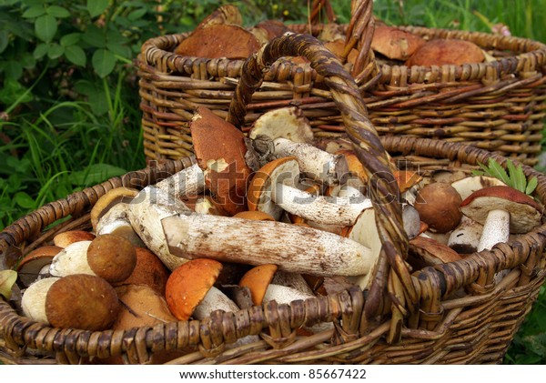 Two baskets of mushrooms