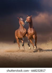 Two bay horses play with each others on the sand on evening sky background