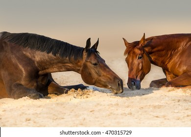 Two beautidul  horse rest in sand