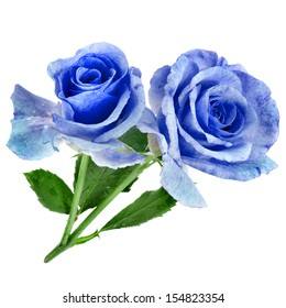 two beautiful blue rose isolated on white background