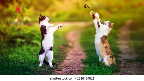 two beautiful cats walking in a Sunny summer garden and catch a flying swallowtail butterfly with their paws