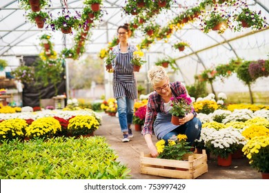 Two beautiful charming busy florist girls with eyeglasses working in the sunny greenhouse full of flowers and enjoying in their job.