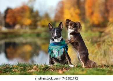 two beautiful dogs posing at the lake in autumn