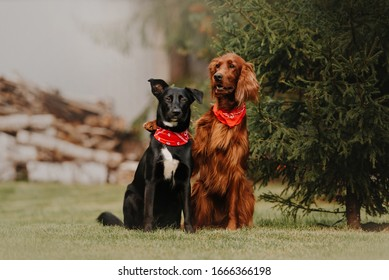 two beautiful dogs in red bandanas sitting together outdoors