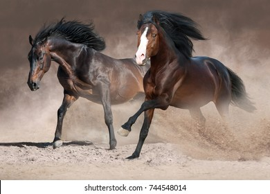 Two beautiful horses with long mane run gallop on desert dust