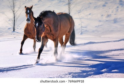 Two beautiful horses in snow field in evening light