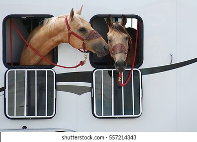Two beautiful horses sticking their head through the window of their trailer and one of them is looking like it is planting a kiss on the other.