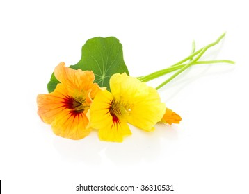 Two beautiful nasturtium with leaf