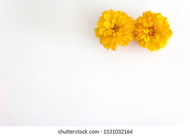 two beautiful orange marigold flower 260nw