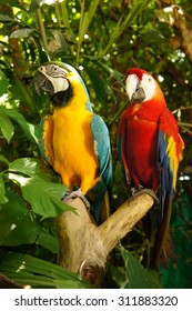 Two beautiful parrots.