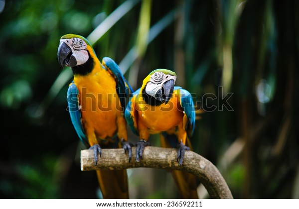Two Beautiful Parrots