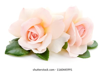 Two beautiful pink roses on a white background.