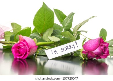 Two beautiful pink roses with I'm sorry message.