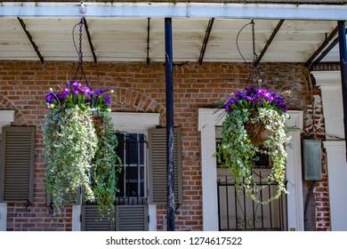 Two Beautiful Planters Filled with Purple Flowers and Creeping Ivy Hang of the Balcony of a Traditional Brick House in the French Quarter of New Orleans, Louisiana, USA