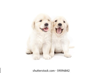 Two beautiful puppies