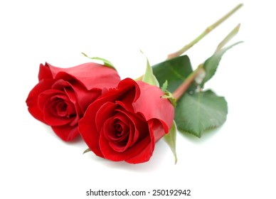 two beautiful red roses isolated on white background