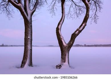 Zwei schöne Bäume stehen am Rande eines Feldes. Das Licht der Morgensonne fällt auf die Bäume. Es gibt Schnee und es ist sehr kalt. Im Altmark, Sachsen-Anhalt gesehen.