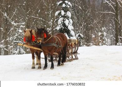 two beautiful walking horses in the snowy winter