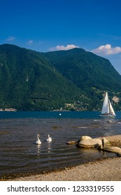 Two beautiful white swans swimming in the lake of Lugano on a beautiful Swiss alps background and blue sky in Lugano, Switzerland.