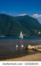 Two beautiful white swans swimming in the lake of Lugano with white sailboat on a beautiful Swiss alps background and blue sky in Lugano, Switzerland.