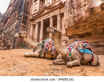 Two bedouin camels rests near the treasury Al Khazneh carved into the rock at Petra, Jordan. Petra is one the New Seven Wonders of the World