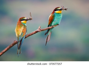 Two bee-eaters and two butterflys
